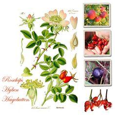 seidenfein 's Dekoblog: Hagebuttenherbst ! ... hyben efterår ! ... rosehips autumn !