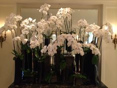White Orchids - Beverly Wilshire