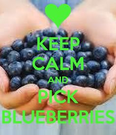 KEEP CALM AND PICK BLUEBERRIES