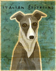 Italian Greyhound. Looks just like Guillermo!!