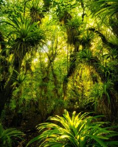 Fakahatchee Strand Preserve State Park, Florida © copyright by Paul Marcellini. Tropical Forest, Tropical Garden, Tropical Plants, Tropical Flowers, Landscape Photography, Nature Photography, Jungle Art, Wild Forest, Paludarium
