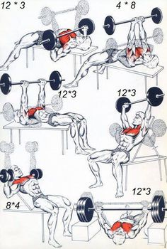 Chest-workout.jpg (485×720)