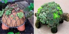 This Succulent Turtle Planter Is Basically a Chic Version of the Chia Pet Garden Crafts, Garden Projects, Garden Art, Turtle Homes, Chia Pet, Pot Jardin, Garden Architecture, Arte Floral, Plantation