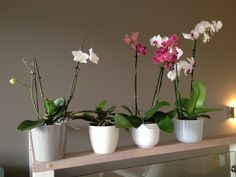 Näin pidät orkideasi elossa - Luvannut en ruusutarhaa   Lily.fi