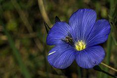 Blue- Azules by Pedro Francisco  Condés de la Torre on 500px
