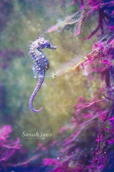 sealife photography ocean life aquarium of Limoges Beautiful Sea Creatures, Animals Beautiful, Sea Dragon, Dragon Seahorse, Octopus, Water Animals, Aquarium Fish, Seahorse Aquarium, Freshwater Aquarium