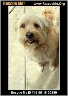 Boy (male)  Havanese Mix  Age: Young Adult  Compatibility:Good with Most Dogs Health:Neutered, Vaccinations Current  Meet Boy, We got Boy from a lady who Is moving and could no longer have him.Boy is 2 years old. He is about 30 pounds. He is neutered. He has had his shots, rabies, micro chipped, and bortatella.We are thinking he is a havanese,Maltese,poodle mix.If you are interested or have any questions about boy please email me. We do not transport or ship dogs.  Adoption Fee…