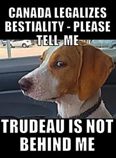 But isn't bestiality punishable by DEATH according to the satanic koran? Does Justine Trudeau think he will get away with this? You idiots in Canada thought it was smart to elect him! Liberal Hypocrisy, Liberal Logic, Politics, The Twits, Dumb People, Political Memes, Justin Trudeau, Screwed Up, Twisted Humor