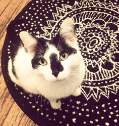 My kitty!! The Cutest Cats | THE CAT'S MIAU | The World's Cutest Cats
