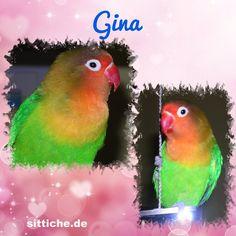 Gina - die Ausbrecher-Königin - Wellensittich Forum und Galerie fuer Wellensittich-Freunde Parrot, Animals, Budgies, Friends, Parrot Bird, Animales, Animaux, Animal, Animais
