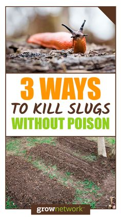 3 ways to get rid of slugs naturally and organically!
