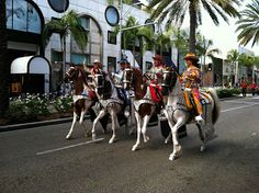 1000 images about parade horses on pinterest horse tack