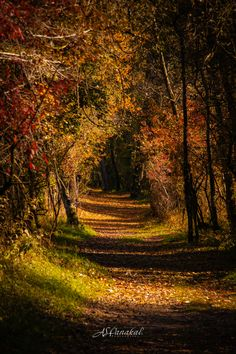 Canton Ticino, Nature View, Yellow Leaves, Image Types, Paths, Thats Not My, Country Roads, Autumn, Fall Season