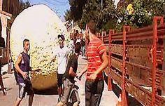 """Reportaje """"España Directo"""" #Boloencierro #Mataelpino Los llaman los """"toros-globo"""""""