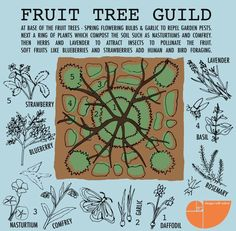 Food Forest Gardens & Plant Guilds in Permaculture Design. Learn how to create plant guilds in your own backyard with permaculture design examples. Learn the 7 layer food forest and how to add…More Permaculture Design, Permaculture Garden, Potager Garden, Garden Landscaping, Forest Plants, Forest Garden, Garden Art, Organic Gardening, Gardening Tips