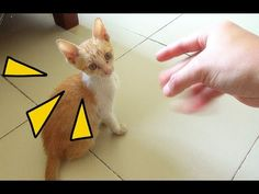 FUNNY CATS - TRY NOT TO LAUGH CHALLENGE   재미 있은 고양이 영상 2017   Meo Cover ...