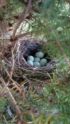 Beautiful bird nest on my front porch in Charlotte TN