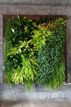 This is just so gorgeous! 16 Reasons to make a living wall and (amazing) examples.