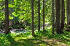 Fototapeta Zelený les ✓ Snadná instalace ✓ 365 denní záruka vrácení peněz ✓ Procházejte ostatní vzory z této kolekce!