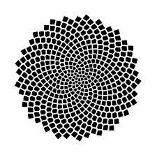 Fibonacci Numbers of Sunflower Seed Spirals