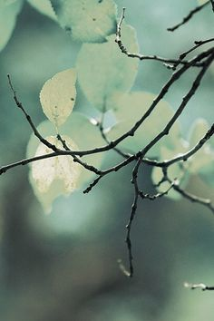 Twigs by olgaanatolevnafilatova - Stil - Mint Bokeh, Simply Beautiful, Beautiful World, Foto Macro, Belleza Natural, Belle Photo, Color Inspiration, Daily Inspiration, Mother Nature