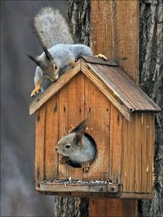 """the top one is either thinking...""""Crap! She saw me!"""" or """"WHO IS IN MY HOUSE?!?!?!"""""""