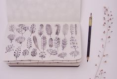 blossom and leaf sketches by miha hancic on flickr