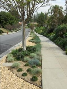 drought tolerant curb appeal