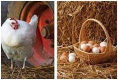 Country Living and Homesteading Plans at BackroadHome.net