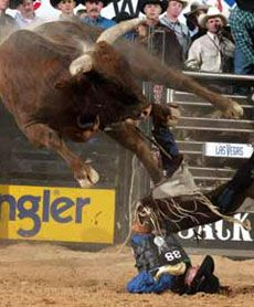 Houston rodeo, largest rodeo in the USA. Ban rodeo and animals cruelty !