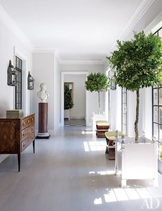 In the hallway of a Houston mansion revived by interior designer Bruce Budd, footed planters contain ficus trees.