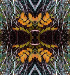 roots, reflection, mirror, pattern, nature, distortion