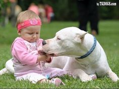 Dogo Argentino Dog Loving And Protecting Baby Compilation - Dog Loves Ba...