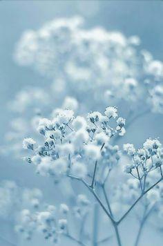 Color Azul Pastel Photograph by Hazed Light Blue Aesthetic, Blue Aesthetic Pastel, Aesthetic Colors, Flower Aesthetic, Aesthetic Pictures, Blue Wallpapers, Wallpaper Backgrounds, Blue Backgrounds, Bleu Pastel