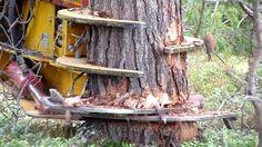 Amazing Tree Cutting Machine   Modern Machine