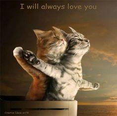Titanic cats...  Veja mais em http://www.comofazer.org