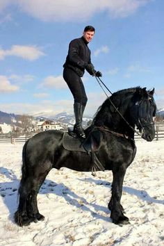 World's most gorgeous horse!! What a beauty ❤❤