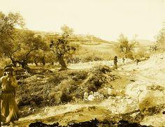 Nablus-نابلس: NABLUS - Late 19th, early 20th c. 125 - Mountain track from Nablus to Sabastiya
