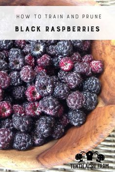 How To Train and Prune Black Raspberries: Black raspberries can be a delicious and productive crop for the small landscape. Learn how to train and prune black raspberries for the best harvest. #gardening