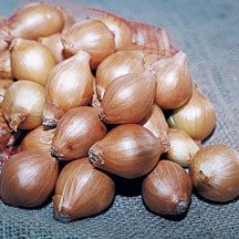 Shallots Golden- Golden yellow skin with a white flesh very mild flavor between an onion and garlic.