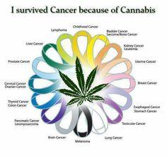 #endthedrugwar #cannabiscurescancer #endocannabinoidsystem #fdakills #chemokills #radiationkills #pillskillbutlegal #cigskillbutlegal #alcoholkillsbutlegal #cannabisisaplant #cannabisismedicine #cannabisisavegatable