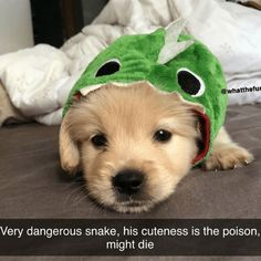 Beware: cuteness overload! #Memes #Cute #Aww #Dogs #Puppy #Animals Cute Puppy Meme, Cute Puppies, Cute Dogs, Dogs And Puppies, Minions Funny Images, Minions Quotes, Funny Minion, Funny Sports Pictures, School Pictures