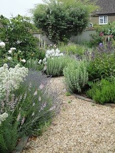 Pea gravel garden path edged with perennials