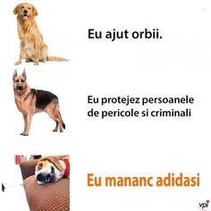 Cățelul meu - Viral Pe Internet Funny Pics, Funny Pictures, Funny Memes, Fart Humor, Romania, Internet, Lol, Puppies, Photos