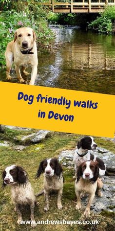 You are spoilt for choice exploring in Devon with your dog, lovely walks along the Southwest coast path, river walks or woodland walks are all a short distance from Andrewshayes. At Andrewshayes we are a dog friendly Holiday Park. Holidays In England, Dog Friendly Holidays, South West Coast Path, Dog Friendly Hotels, Country Walk, Holiday Places, Holiday Park, Dog Walking, Dog Friends