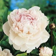 landscaping – Gardening Ideas, Tips & Techniques Landscaping Plants, Outdoor Plants, Flower Power, Layout Design, Landscape Design, Rose, Terrazzo, Anna, Gardening