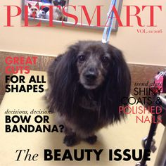 My Sadie, the BEST mini doxie even - with beautiful brindle coat.  This is a fun Petsmart thing now - they send a photo as part of dog's grooming.  : )