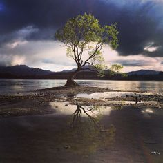 Most photographed tree in New Zealand. Beautiful lake Wanamaker!