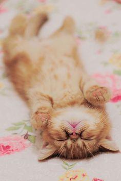 sleepy kitten cute paws