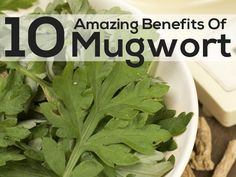 10 Amazing Benefits Of Mugwort For Skin, Hair And Health
